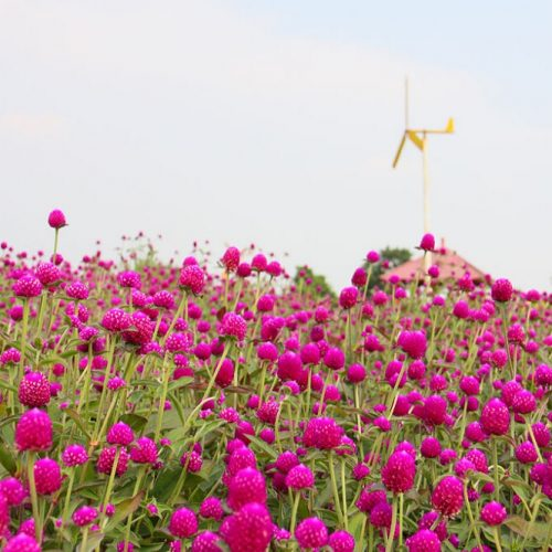 广州花都香草世界拓展基地
